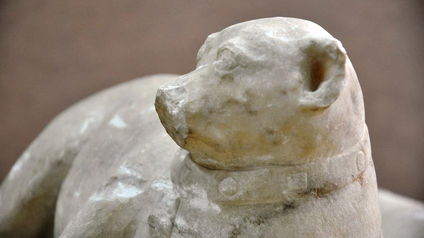 Ένας «εξηπλωμένος μικρός κύων» στο Αθέατο Μουσείο