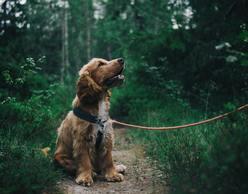 Πεζοπορία στον Υμηττό με το σκυλάκι σου