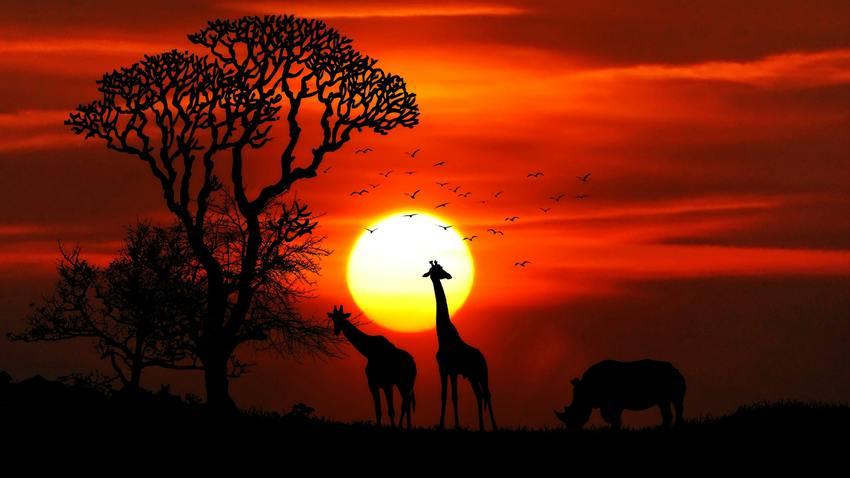 Αφρικανική Γιορτή «TAAMA - ΤΟ ΤΑΞΙΔΙ»