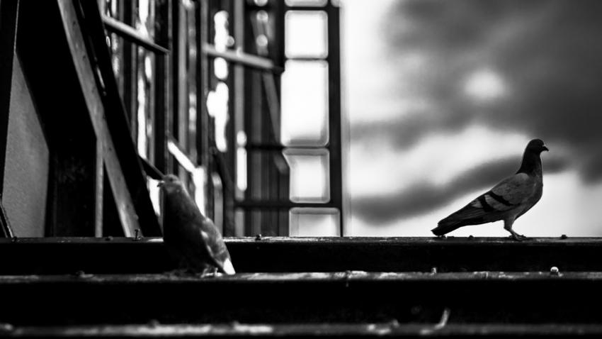 «Καρτερία» − Η ζωή και η αντοχή της, διαμέσου του χρόνου, στις εργατικές πολυκατοικίες