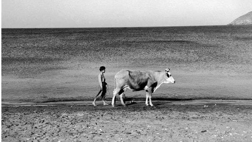 «Περίπατος στην έρημη Χώρα» στην Άνδρο