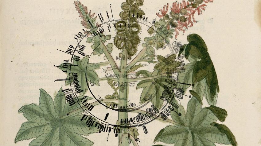 Botanic Fictions | Η κατάσταση του κόσμου μέσα από τα φυτά