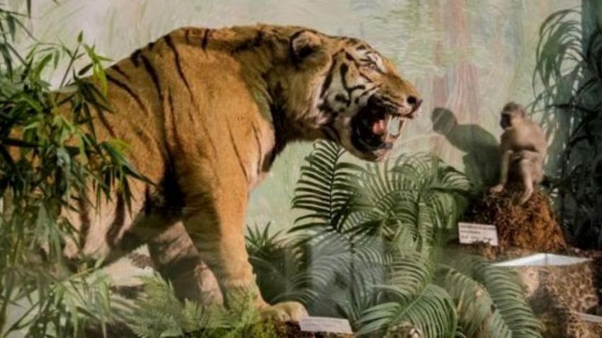 Παράθυρο στη φύση από το Μουσείο Γουλανδρή Φυσικής Ιστορίας!