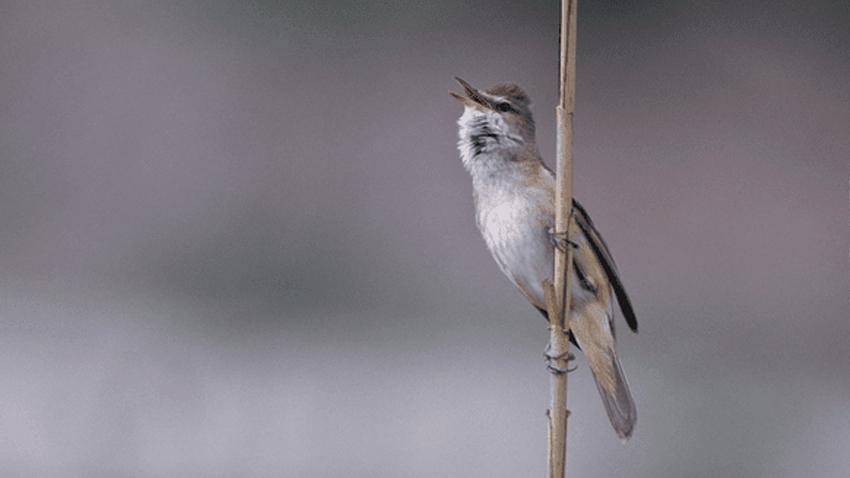 Ο A. Bonetti μάς ταξιδεύτει στις περιοχές Natura 2000
