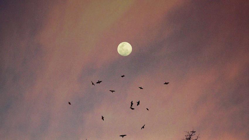Απολαύστε το strawberry moon σε μια πεζοπορία στην Πάρνηθα