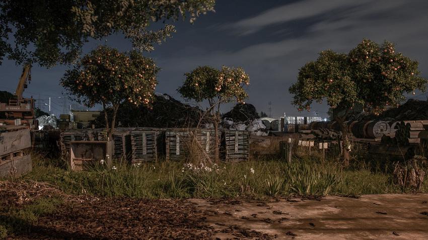 Ρέα Παπαδοπούλου :: DARK TREE | Ατομική έκθεση φωτογραφίας