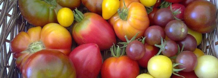 Ολόφρεσκα λαχανικά από το κτήμα Μαυρίκα