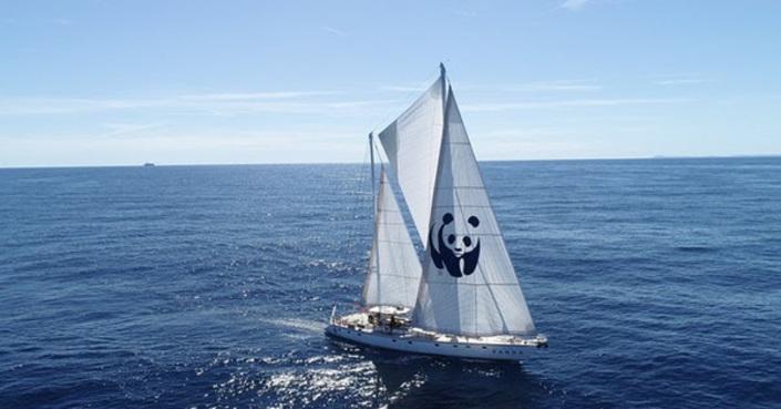 """WWF: Το σκάφος WWF """"Blue Panda"""" φτάνει στο Ιόνιο!"""