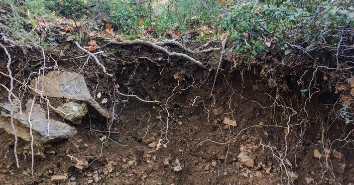 Παγκόσμια Ημέρα Εδάφους: η διάβρωση απειλεί ένα πολύτιμο κοινό αγαθό