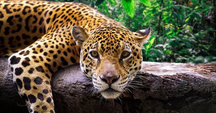 #ΜένουμεΣπίτι παρέα με τα ζώα του Αττικού Ζωολογικού Πάρκου