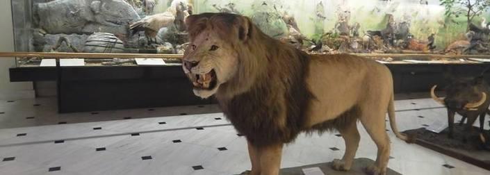 Μουσείο Γουλανδρή: Το must της παιδικής μας ηλικίας!