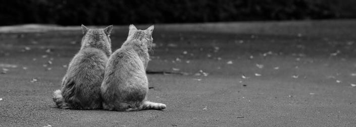 033b0208ecff ... Οι γάτες των Αθηνών