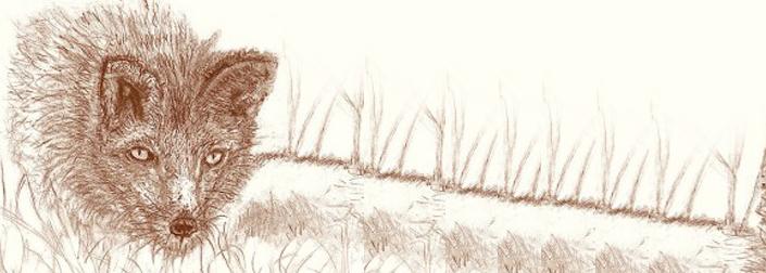 Η αλεπού της σκάλας και άλλες ιστορίες, Ηλίας Λ. Παπαμόσχος, Εκδόσεις Κίχλη